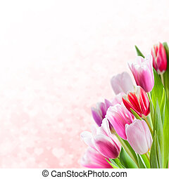 Valentines Day Background with Tulips - Beautiful Valentines...