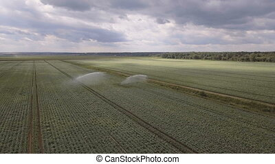Aerial view:Irrigating machine in a potato field