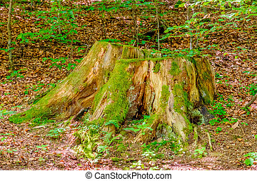 Tree trunk. - Forest detail. Tree trunk.