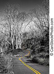 Monochrome landscape view of curvy road in selective color