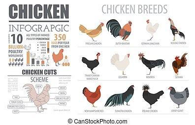 Poultry farming infographic template. Chicken breeding. Flat...
