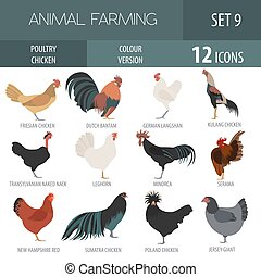Poultry farming. Chicken breeds icon set. Flat design....
