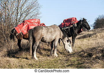 Mountain packhorses on meadow - Mountain packhorses grazing...
