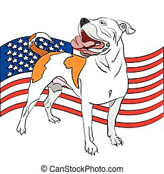 american bulldog in front of an american flag - vector...