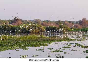Beautiful Pantanal landscape, South America, Brazil. Nature...