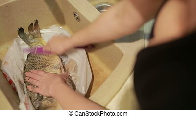 cleaning fish scales with a knife - cleaning carp fish...