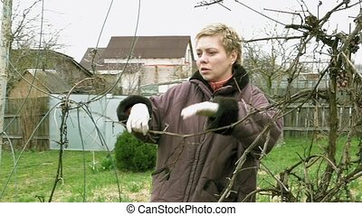 Country girl gardener prunes vine grape twigs - Country...