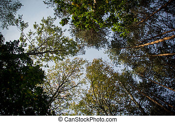 autumn trees - view of tress from worm's-eye view during...