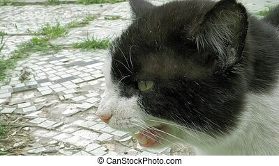 Cat spits whines meows and hisses outdoors outside the...