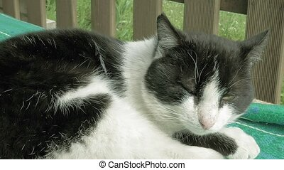 Cat sleeping in patio outside the house - Cat sleeping on a...