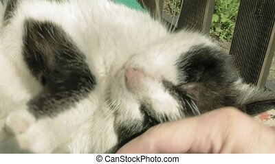 Petting caressing and fondling a cat outdoors in a sunny...