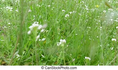 Flying through green grass and wildflowers on the field....