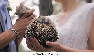 Two little happy hedgehogs in hands of bride and groom....