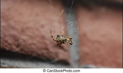 spider catching a fly
