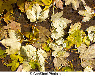 Top view of a wet autumn leaves in the dirty pool on the...