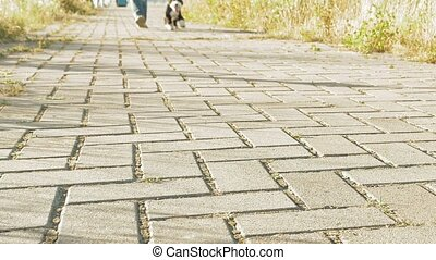 Young woman's feet walking with little funny dog - Static...