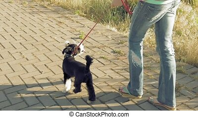 Young woman going along path with little funny dog