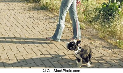 Woman with little funny dog outdoors - Young woman training...