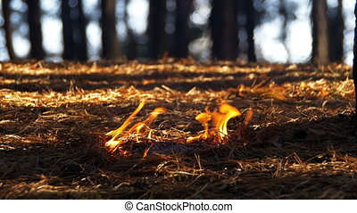 Fire in a Pine Forest - Fire in a pine forest. Pine needles,...