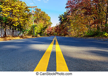 Colorful autumn trees with fallen leaves a winding road -...
