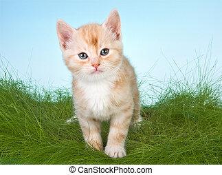 Kitten in grass