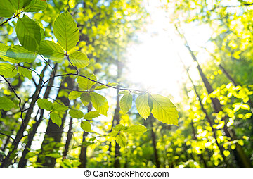 Birch leaves against the sunset in the forest