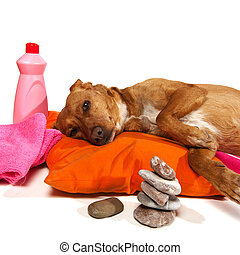 Zen moment for dog - Zen moment and Spa treatment for dog
