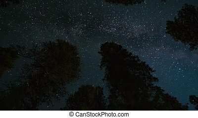 Milky way over giant trees Timelapse - Milky way over the...