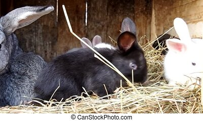 Rabbits in the rabbit hutch relaxing and eating hay