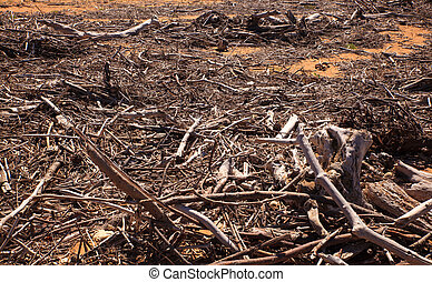 Driftwood Trees Branches and Trash Lumber on Beach