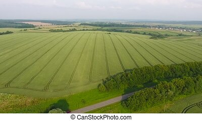 aerial view of wheat field