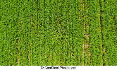 Aerial shot of fields with various types of agriculture....