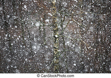 Falling snow background - Winter falling snow over trees...
