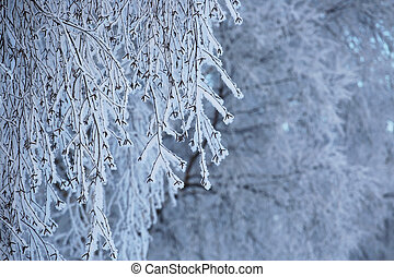 Hoarfrost on trees - Hoarfrost on the trees in cold winter...