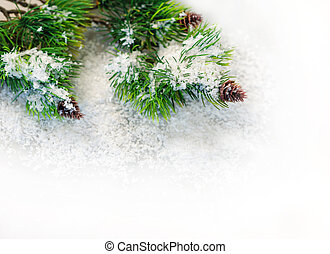 fir branches in the snow on a white background.