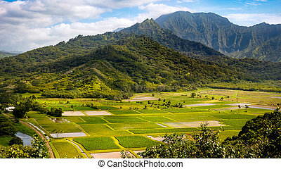 Panoramic landscape view of Hanalei valley and green taro...