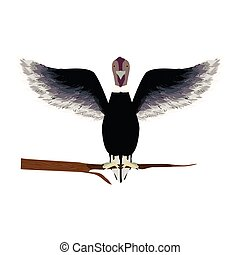 condor animal bird in branch vector illustration