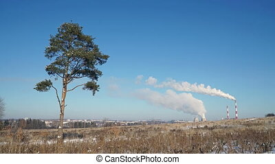 Thermal power plant or a factory with Smoking chimneys and a solitary tree.