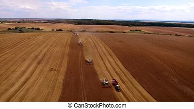 Aerial:fly over wheat harvest on sunny day. aerial view.