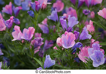 Pink/Blue Wildflowers