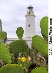 La Mola lighthouse Formentera nopal chumbera plants...