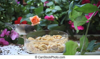 two birds at a feeder with flowers - a dark-eyed junco and a...