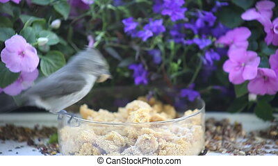 titmouse and chickadee at feeder - a titmouse and chickadee...