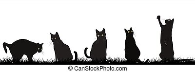 Black cats playing outdoor