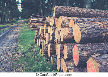 Timber Stacked logs in the forest - Freshly sawn logs in a...