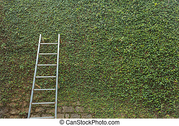 steel ladder on green leaf ivy plant covered stone fence...