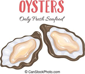 Oysters vector illustration in cartoon style. Seafood...