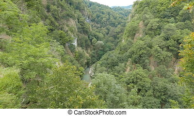 River Valley of Khost. Yew-tree grove. Sochi, Russia....