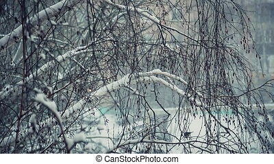 Tit on a snow-covered branches 4 - Titmouse on a...