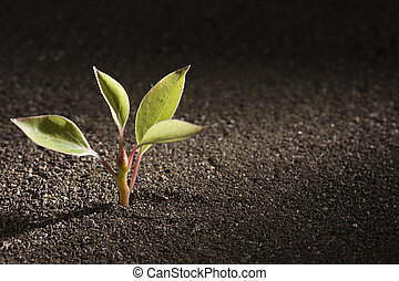 Plant - A young green plant growing out of brown soil